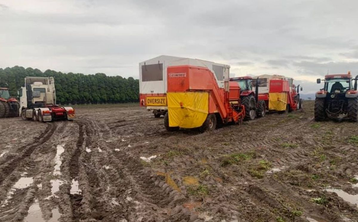 Rain decimates Tasmanian potato crop; processors fear European spuds will be dumped on Aussie market