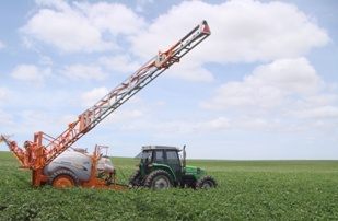 Pesticides spraying in potato field