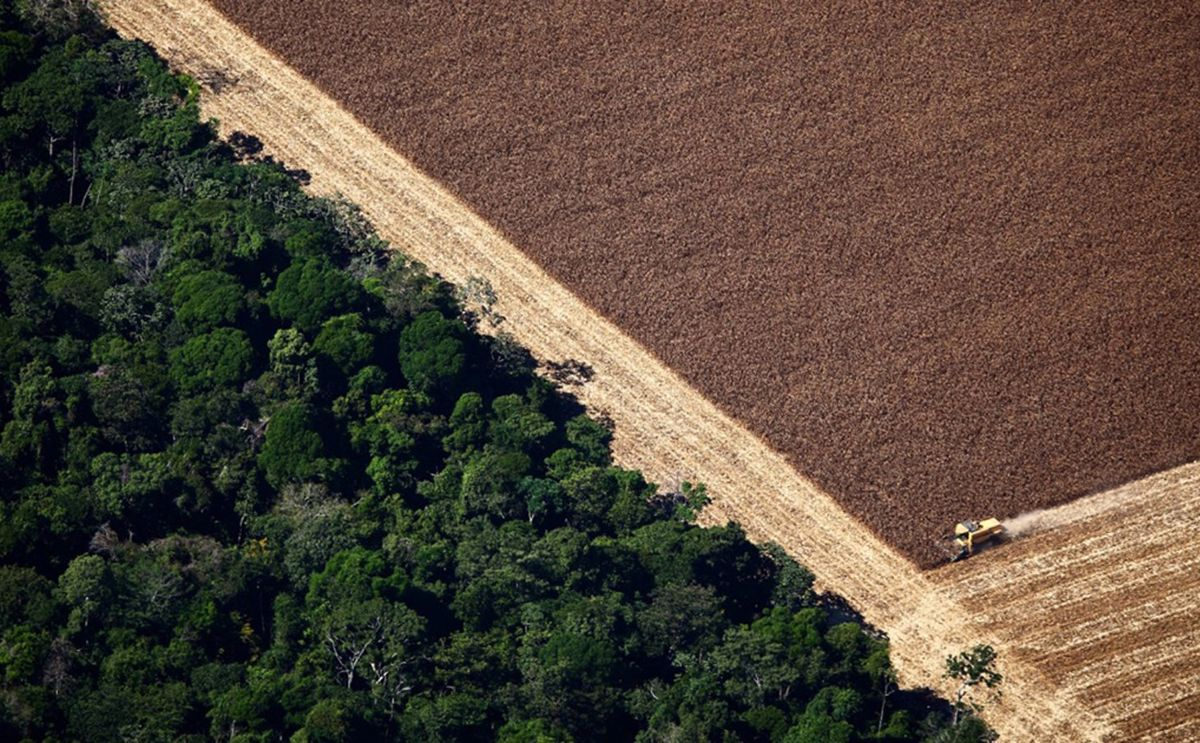 Soy production has led to vast areas of the Amazon rainforest being cleared, destroying vital ecosystems in the process.