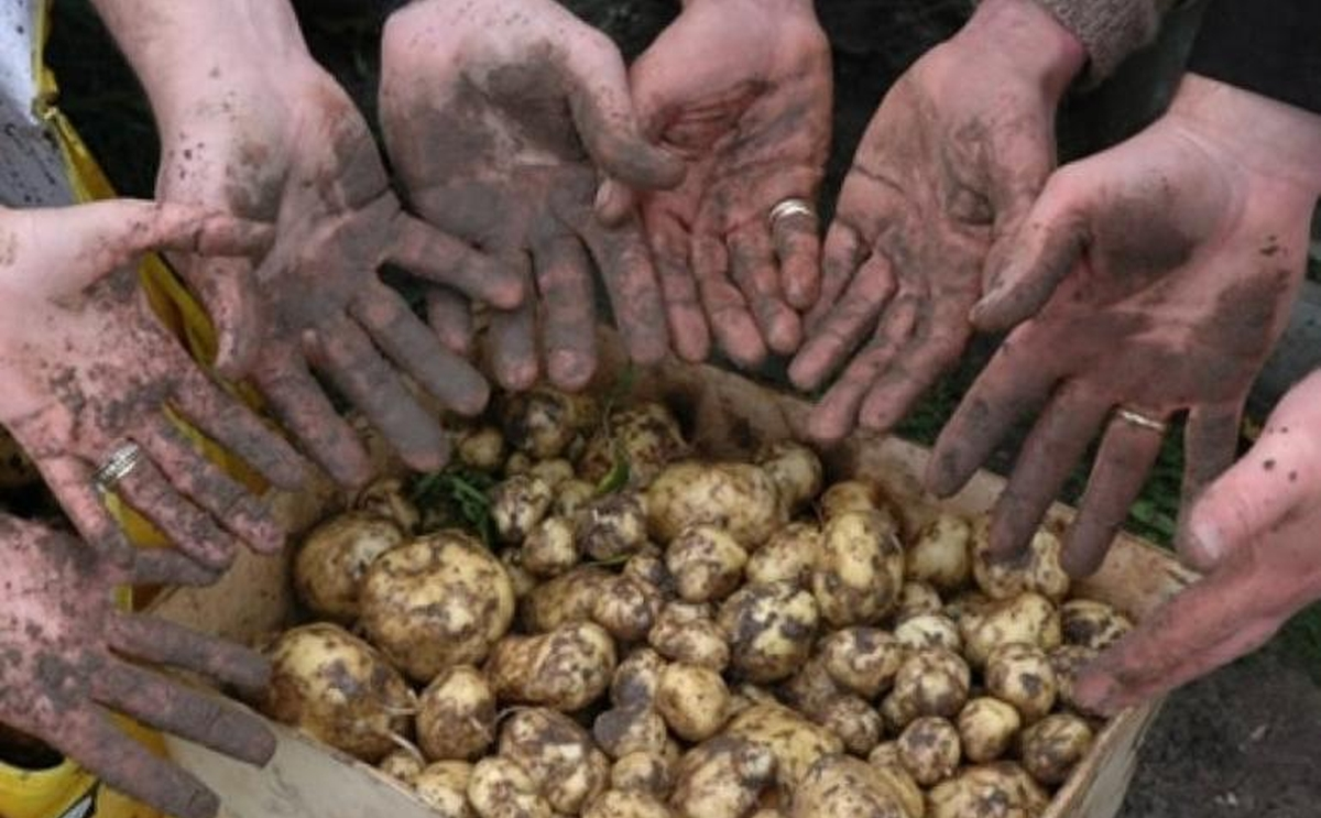Create your own 'Bonnotte' and charge the Potato Price you want | PotatoPro