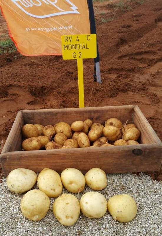 Potato supplier HZPC and its distributor Wesgrow Seed Potatoes are