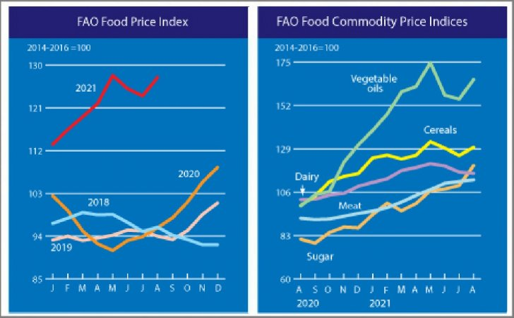The FAO Food Price Index rebounded rapidly in August.