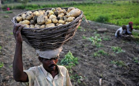 In Jharkhand, a homegrown innovation is driving up potato farmers' incomes