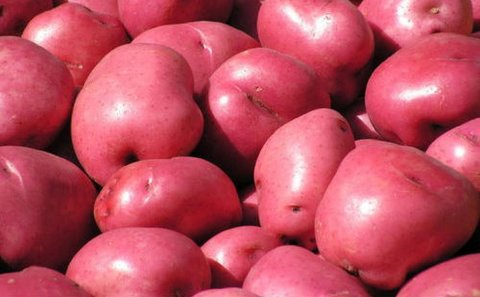 ITC to begin red potato cultivation trials in Gujarat