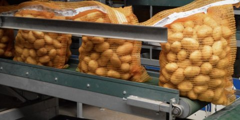 Improving potato quality results in export opportunities for Nedato.