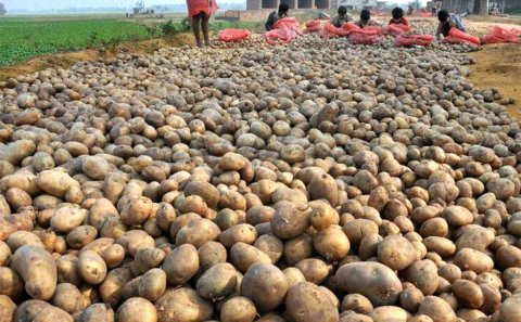 Potato price surges by 28%-38% in UP, West Bengal as demand rises in the lockdown period