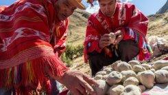 Chuño, el secreto milenario de los Andes para lograr que una papa dure 20 años