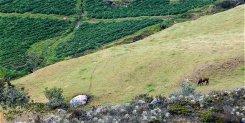 Pueden convivir la papa, la ganadería y el turismo en los páramos colombianos? (Opinión)