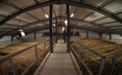 Bulk potato storage for processing potatoes in the United Kingdom