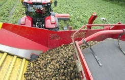 Dutch Potato processing Industry approaches 4 million tons milestone