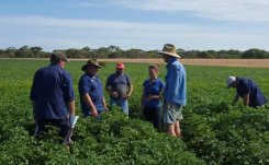 IPM approach seed potato growers Kangaroo Island hops to mainland Australia
