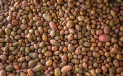 United States Potato Stocks Up 6 percent from April 2016