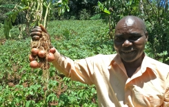 Farmers in Tanzania benefit from more resilient potato varieties