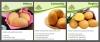 Europlant presents its top potato varieties at Potato Europe
