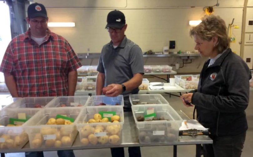 P.E.I. potato growers look to new varieties to help with climate change